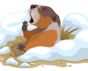 Groundhog Day. Marmot climbed out of hole and yawns